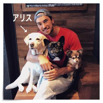 滝クリ、弟、犬好き、アリス